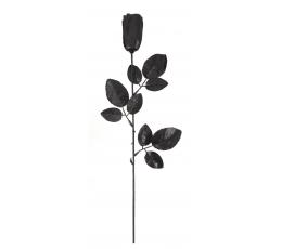 Dekoratīva roze, melna