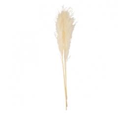 Dekoratīvās smilgas, krēmkrāsas (3 gab./80 cm)