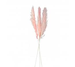 Dekoratīvās smilgas, rozā (3 gab./100 -135 cm)