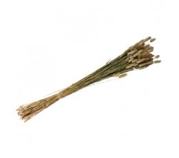 Dekoratīvs smilgu pušķis (50 g./80 cm)